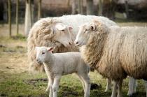 Bettwaren / Bettwäsche aus Schafschurwolle